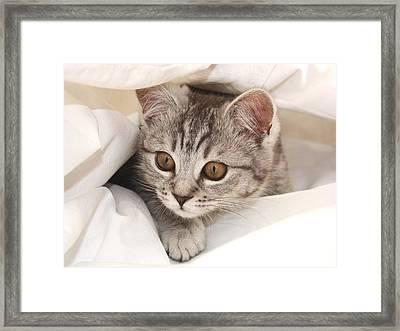 Hello Kitten Framed Print by Claudia Moeckel