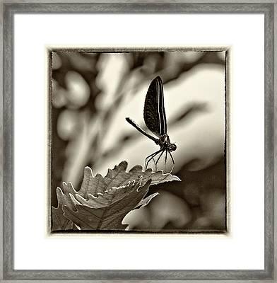 Hello Monochrome Framed Print by Steve Harrington