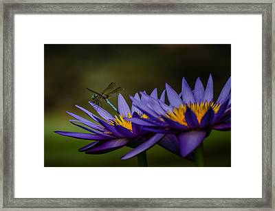 Hello Mr. Dragonfly - Water Lily Framed Print by Carrie Fleitz