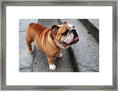 Hello My Friendly Pooch  Framed Print by Eva Kaufman