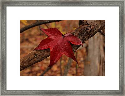 Hello Red Framed Print