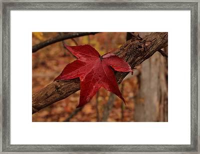 Hello Red Framed Print by Bob Whitt
