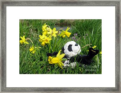 Hello Spring. Ginny From Travelling Pandas Series. Framed Print by Ausra Huntington nee Paulauskaite