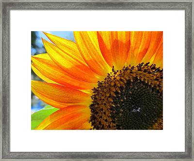 Framed Print featuring the photograph Hello Sunflower by Tina M Wenger
