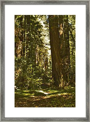 Henry Cowell Redwoods Late Summer Afternoon Framed Print by Larry Darnell