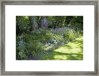 Herbaceous Border Framed Print by Sheila Terry