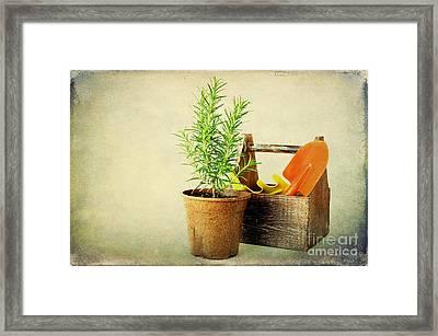 Herbs Framed Print by Darren Fisher