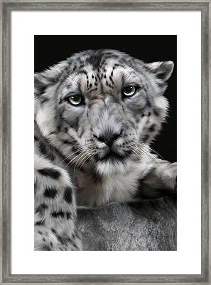 Hercules Framed Print by Big Cat Rescue