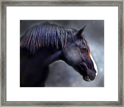 Hercules The Black Stallion Framed Print by Dorothy Walker
