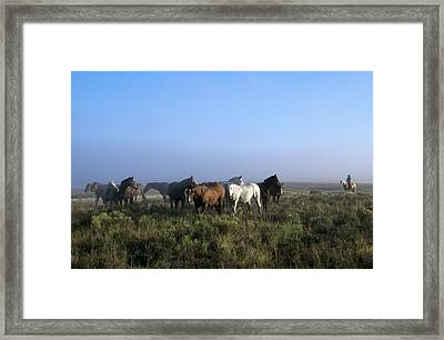 Herd Of Horses And Cowboy On Horseback Framed Print by Natural Selection Craig Tuttle