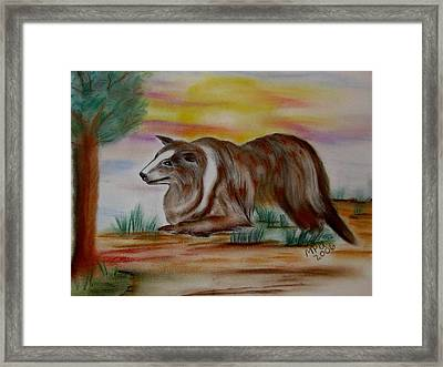Herding Collie Framed Print by Maria Urso