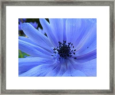 Here I Am Framed Print by Eva Kondzialkiewicz