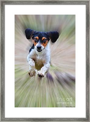 Here I Come Framed Print by Debbie Portwood