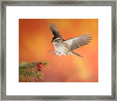 Framed Print featuring the photograph Here I Come by Gerry Sibell