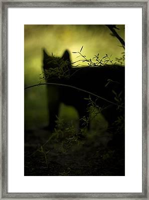 Here Kitty K I T T Y Framed Print