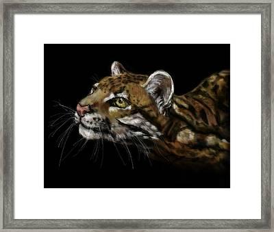 Here Kitty Kitty Framed Print by Lakota Phillips