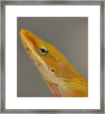Framed Print featuring the photograph Here Lizard Lizard by Tanya Tanski