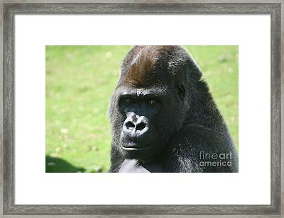 Here's Looking At You Framed Print by Carol Wright