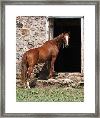 Here's Looking At You. Framed Print