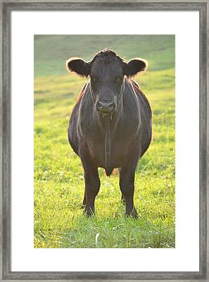 Here's The Beef Framed Print