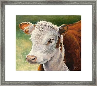 Herford Calf  Framed Print