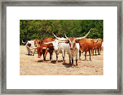 Some Long Horns Ya Got There Framed Print