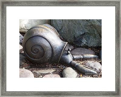 Framed Print featuring the photograph Hermit Crab by Chalet Roome-Rigdon