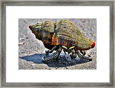 Hermit Crab Framed Print by John Collins