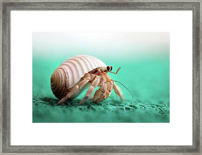 Hermit Crab Running Framed Print by With love of photography