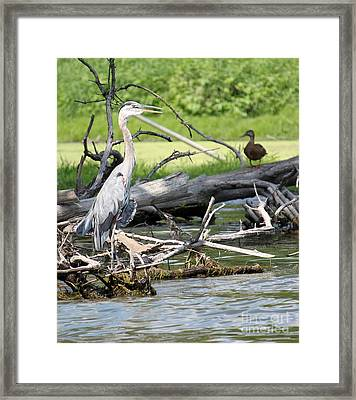 Framed Print featuring the photograph Heron And Mallard by Debbie Hart