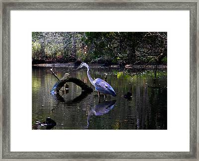 Heron And Root Framed Print by Christy Usilton
