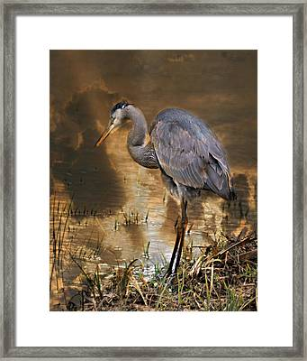 Heron Bronze Framed Print by Marty Koch