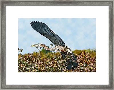 Heron Glide Framed Print