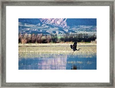 Heron In Flight Framed Print