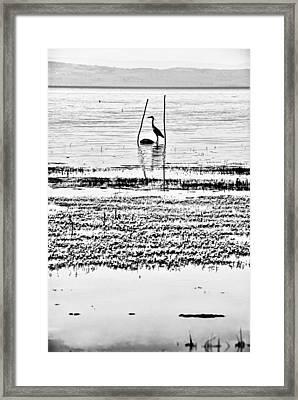 Heron Framed Print by Okan YILMAZ