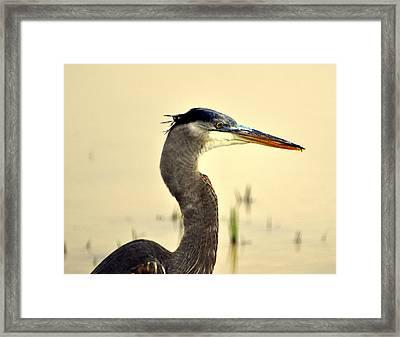 Heron One Framed Print by Marty Koch