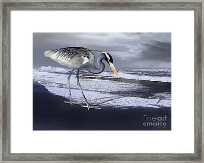 Heron Taking His Afternoon Beach Walk Framed Print by Danuta Bennett