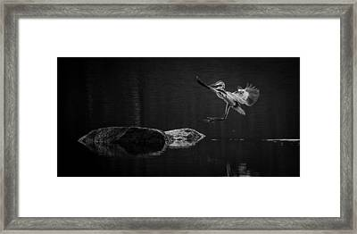 Heron's Land Framed Print by Brian Young