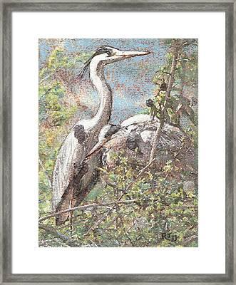 Herons Resting Framed Print