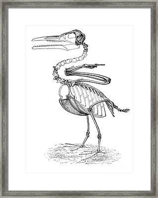 Hesperornis Framed Print by Science Source