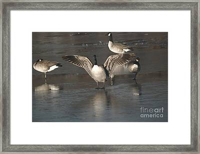 Framed Print featuring the photograph Hey Over Here by Mark McReynolds