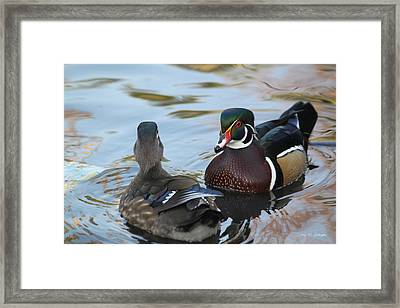 Hey Were Are You Going  Framed Print by Amy Gallagher