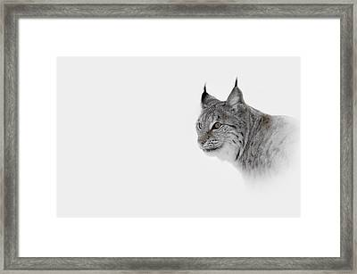 Hi Key Lynx Framed Print