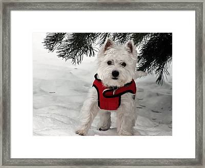 Hi There  Framed Print by Geraldine Alexander