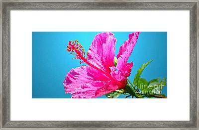 Hibiscus Crystal Luster Framed Print by Gwyn Newcombe