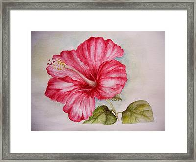 Hibiscus Flower Framed Print by Draia Coralia