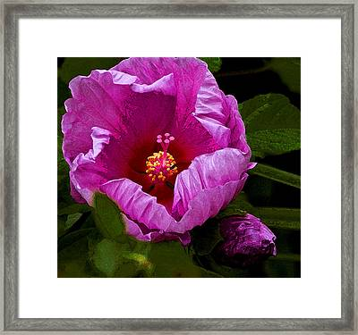 Framed Print featuring the photograph Hibiscus II by Michael Friedman