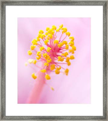 Framed Print featuring the photograph Hibiscus In Pink And Yellow by Anne Rodkin