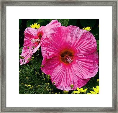 Framed Print featuring the photograph Hibiscus by Michael Friedman