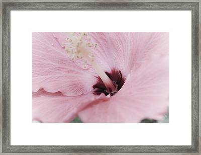 Framed Print featuring the photograph Hibiscus Moments by Janie Johnson